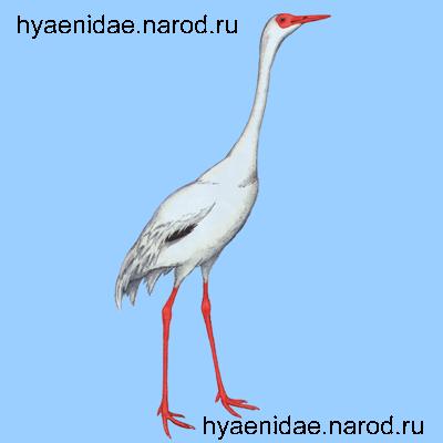 """"""",""""hyaenidae.narod.ru"""
