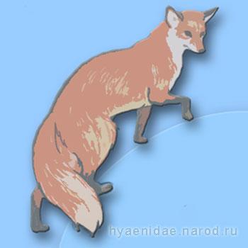 Лиса - лисичка