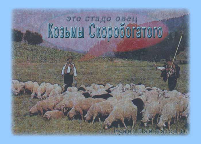 стадо овец Козьмы Скоробогатого